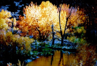 Autumn trees next to stream.